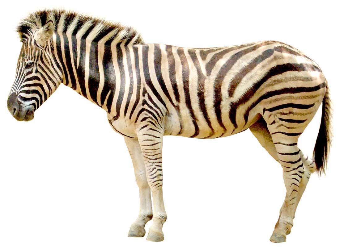 動物: kmsysフリー素材集blog